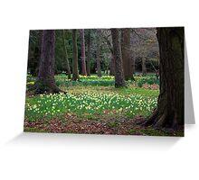 Daffodill Wood Greeting Card