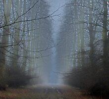 Enveloped In The Morning Mist by CJTill