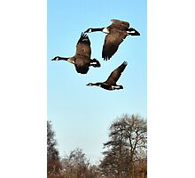 Trio Flight Photographic Print