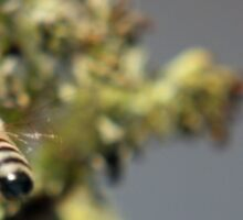"""And this is the """"tail"""" of the story... (Common bee – Apis mellifera) Sticker"""