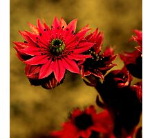 A desert roze for you Photographic Print