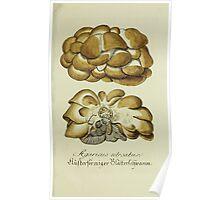 Plantarum Indigenarum et Exoticarum - Lukas Hochenleitter und Kompagnie 1788 - 303 Poster