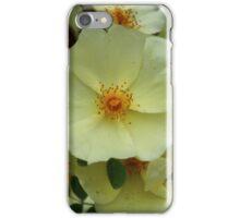 Chinese Floribunda Rose Bush iPhone Case/Skin