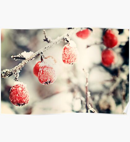 Berries and Frost - January 2010 Poster