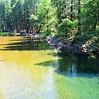Yosemite National Park landscape photography. Gorgeous  lush forest trees and clear water river. by naturematters