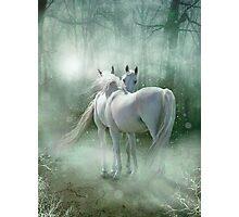 A Magical Meeting Photographic Print