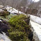 Moss by NoItsMyBubble