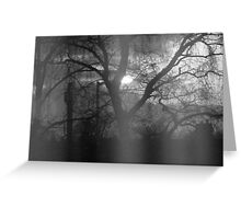 Bright light trough the trees silhouette Greeting Card