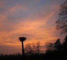 The storks nest by Antanas