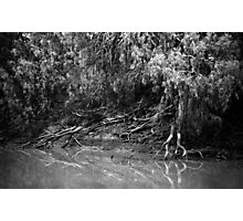 On The Banks Of The Darling..... Photographic Print