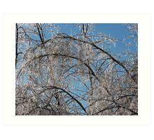Ice on Trees Art Print