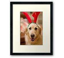 Golden Reindeer Framed Print