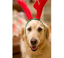 Golden Reindeer Photographic Print