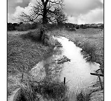 Purwell Fields No. 2 - (Hitchin, Hertfordshire) - Black & White Version by MoGeoPhoto