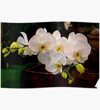 Zen and Orchids Poster
