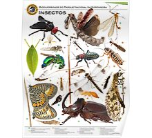 Insects of Gorongosa National Park, Mozambique Poster