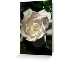 Gardenia in my garden Greeting Card