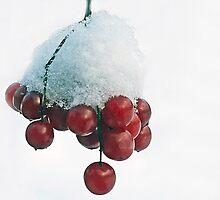 Berries of winter by cherylc1