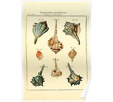 Neues systematisches Conchylien-Cabinet - 219 Poster