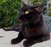 Black Cat Blues by Heidi  Jacobsen