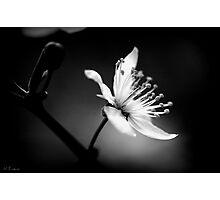 whisper of white Photographic Print