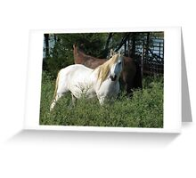 White Mustang - Mustang Ranch Greeting Card