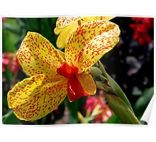 Floral Bow Tie ~ Canna Lilies Poster