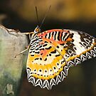 Blissful Butterfly by dilouise