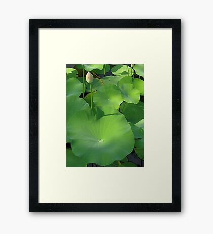 Dew on a Lotus Pad - Norfolk Botanical Gardens Framed Print