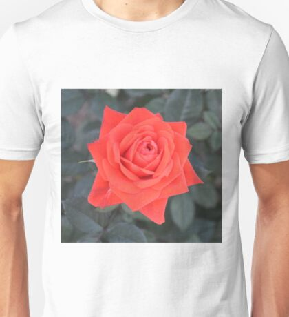 PERFECT RED ROSE Unisex T-Shirt
