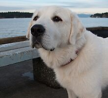 On The Pier by Shawnna Taylor