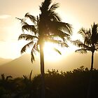 Palms by raoulphoto