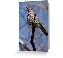 Norther Flicker - Ottawa Ontario Greeting Card