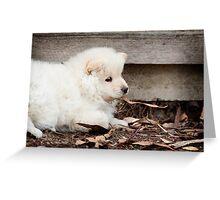 Finnish Lapphund Puppy Greeting Card