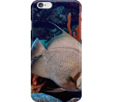 Caribbean Grey Angel Fish along a Coral Reef  iPhone Case/Skin