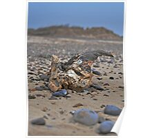 Southwold Driftwood Poster