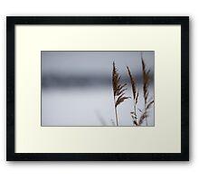 Reeds in winter Framed Print