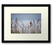 Reeds in focus Framed Print
