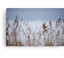 Reeds in focus Canvas Print