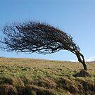 Wind beaten by maxwell78