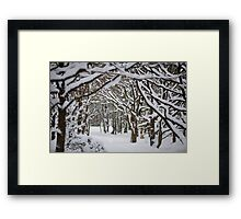 Trees and Winter Framed Print