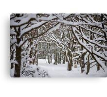 Trees and Winter Canvas Print