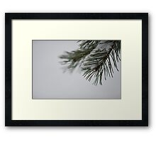Pine and Snow Framed Print