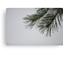 Pine and Snow Canvas Print