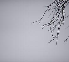 Birch Branch by Johan Hagelin