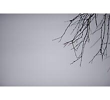 Birch Branch Photographic Print