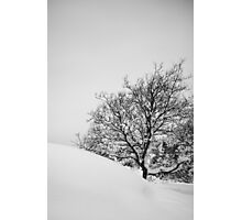 Tree in slope Photographic Print