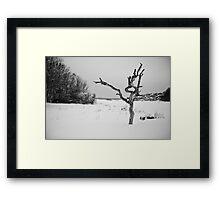 The Snowy Dead Tree Framed Print