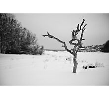 The Snowy Dead Tree Photographic Print