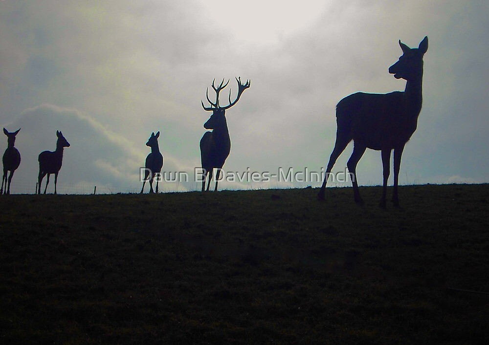 Deer Family by Dawn B Davies-McIninch